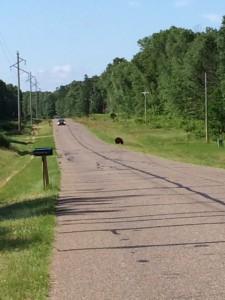 Black Bear of East Horseshoe lake Road and 109